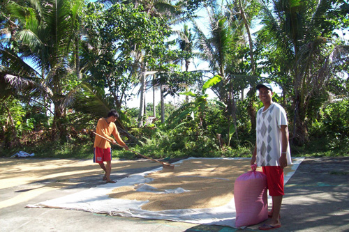 "Edmar & Brian drying the ""palay."""